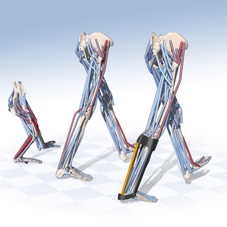 OpenSim-3-walking-models
